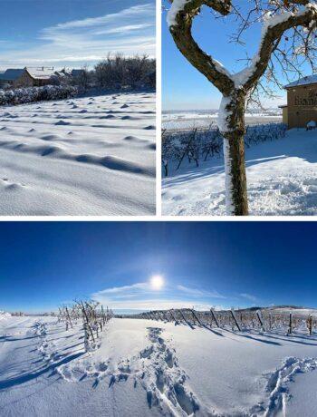 Wijngaard Fernand Engel in de sneeuw